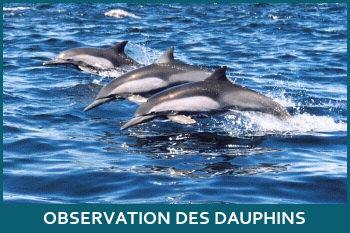 croisières pour observer les dauphins à lisbonne