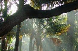 réouverture du jardin botanique de lisbonne