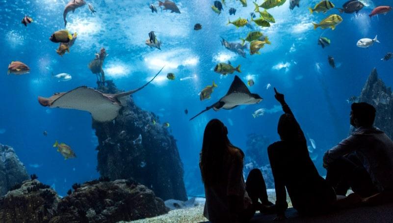 aquarium de lisbonne