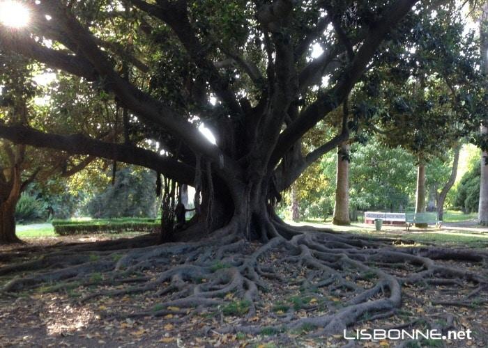 les jardins de lisbonne